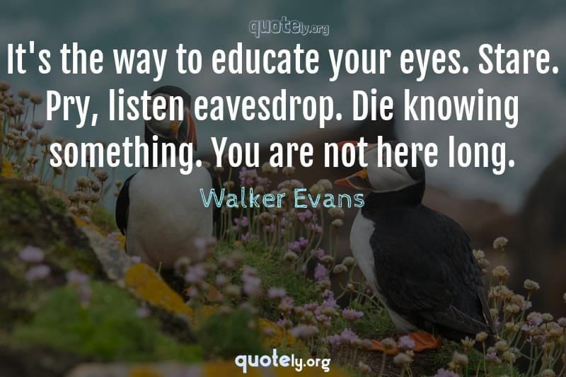 It's the way to educate your eyes. Stare. Pry, listen eavesdrop. Die knowing something. You are not here long. by Walker Evans
