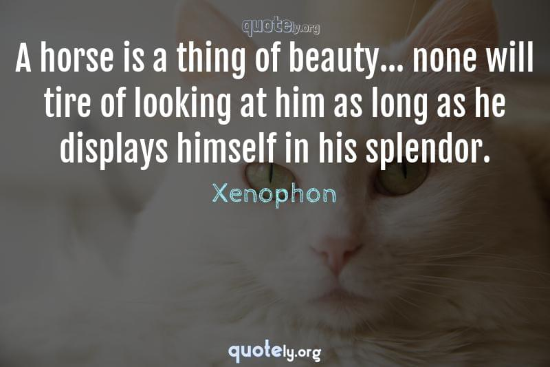 A horse is a thing of beauty... none will tire of looking at him as long as he displays himself in his splendor. by Xenophon