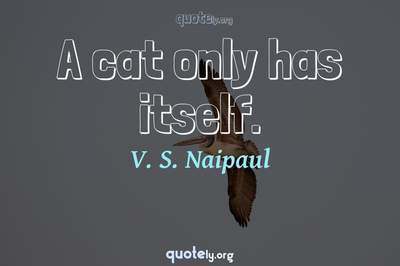 Photo Quote of A cat only has itself.