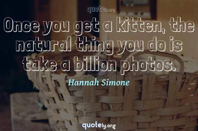 Photo Quote of Once you get a kitten, the natural thing you do is take a billion photos.