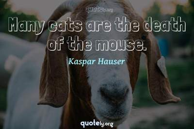 Photo Quote of Many cats are the death of the mouse.