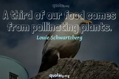 Photo Quote of A third of our food comes from pollinating plants.
