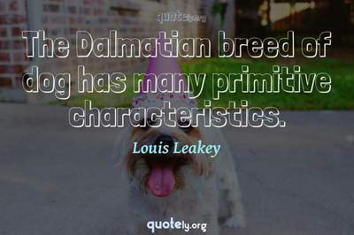 Photo Quote of The Dalmatian breed of dog has many primitive characteristics.