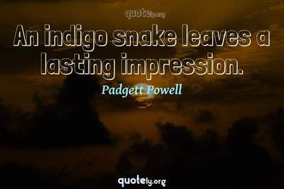 Photo Quote of An indigo snake leaves a lasting impression.