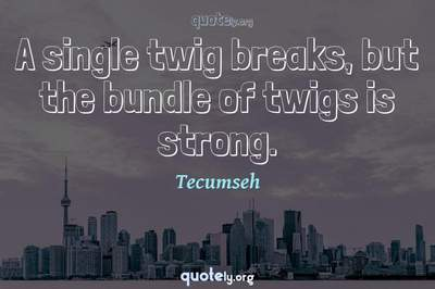 Photo Quote of A single twig breaks, but the bundle of twigs is strong.
