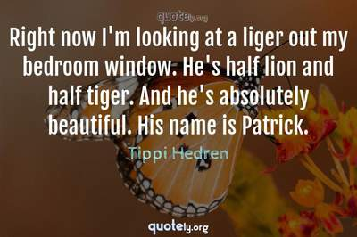 Photo Quote of Right now I'm looking at a liger out my bedroom window. He's half lion and half tiger. And he's absolutely beautiful. His name is Patrick.