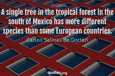 Photo Quote of A single tree in the tropical forest in the south of Mexico has more different species than some European countries.