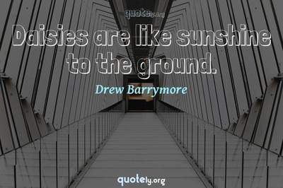 Photo Quote of Daisies are like sunshine to the ground.