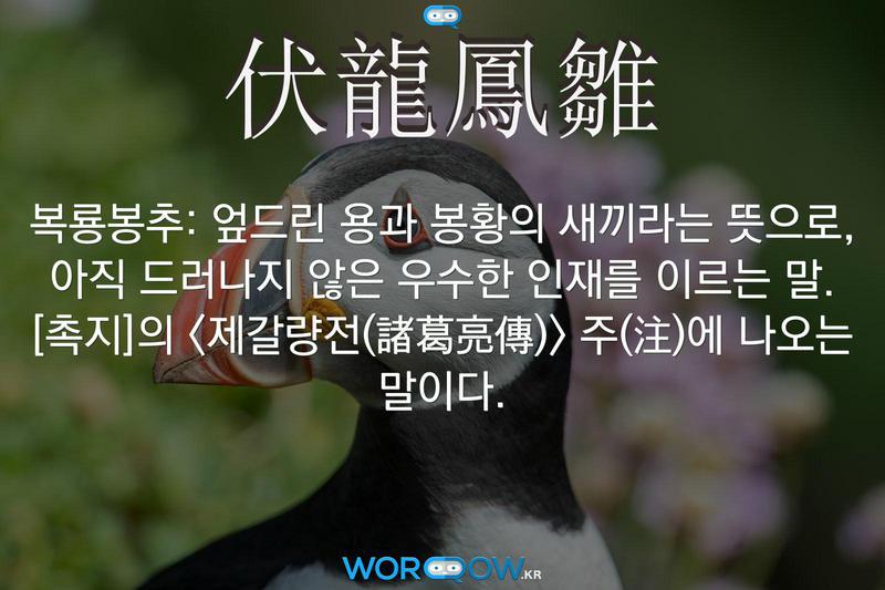 伏龍鳳雛(복룡봉추): 엎드린 용과 봉황의 새끼라는 뜻으로, 아직 드러나지 않은 우수한 인재를 이르는 말. ≪촉지≫의 <제갈량전(諸葛亮傳)> 주(注)에 나오는 말이다.