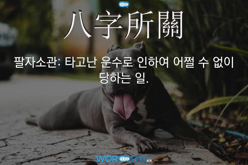 八字所關(팔자소관): 타고난 운수로 인하여 어쩔 수 없이 당하는 일.