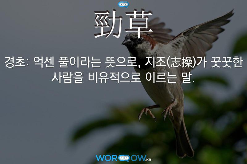 勁草(경초): 억센 풀이라는 뜻으로, 지조(志操)가 꿋꿋한 사람을 비유적으로 이르는 말.