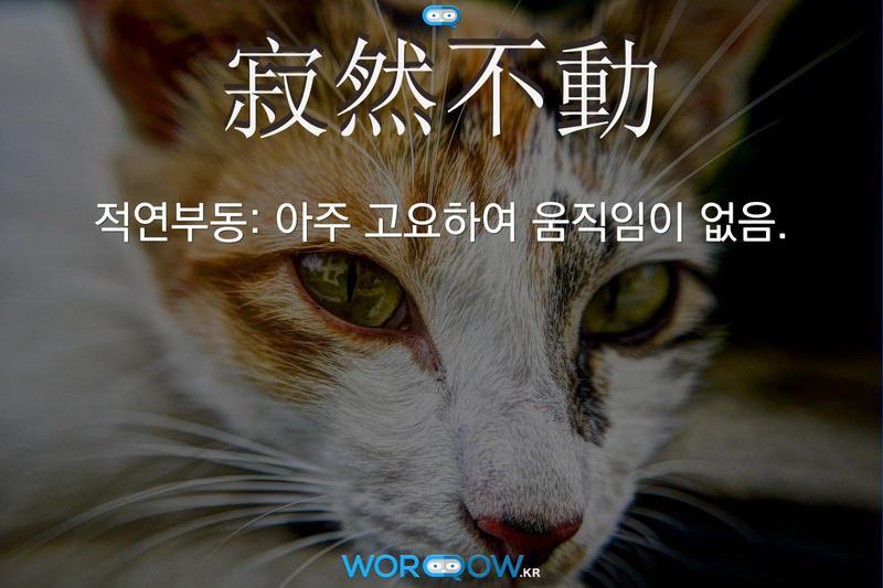 寂然不動(적연부동): 아주 고요하여 움직임이 없음.