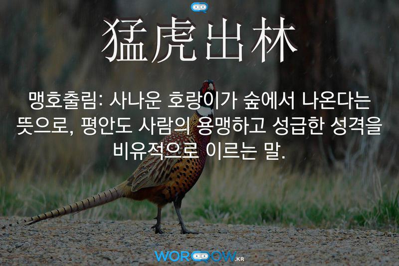 猛虎出林(맹호출림)의 의미: 사나운 호랑이가 숲에서 나온다는 뜻으로, 평안도 사람의 용맹하고 성급한 성격을 비유적으로 이르는 말.