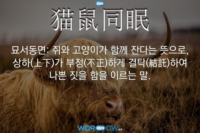 猫鼠同眠(묘서동면): 쥐와 고양이가 함께 잔다는 뜻으로, 상하(上下)가 부정(不正)하게 결탁(結託)하여 나쁜 짓을 함을 이르는 말.