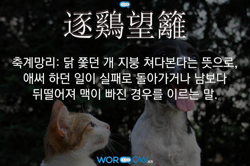 逐鷄望籬(축계망리): 닭 쫓던 개 지붕 쳐다본다는 뜻으로, 애써 하던 일이 실패로 돌아가거나 남보다 뒤떨어져 맥이 빠진 경우를 이르는 말.
