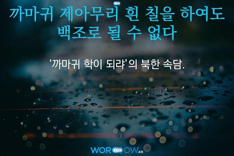까마귀 제아무리 흰 칠을 하여도 백조로 될 수 없다의 의미: '까마귀 학이 되랴'의 북한 속담.