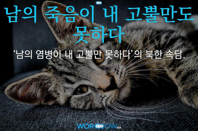 남의 죽음이 내 고뿔만도 못하다의 의미: '남의 염병이 내 고뿔만 못하다'의 북한 속담.