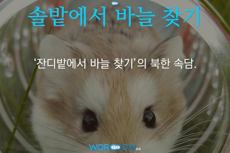 솔밭에서 바늘 찾기: '잔디밭에서 바늘 찾기'의 북한 속담.